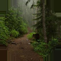 Caminata